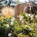kvetinová výsadba v udržateľnej záhrade, ktorá je nenáročná na údržbu a vodu