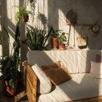 Interiér s betónovou stenou a kvetinami