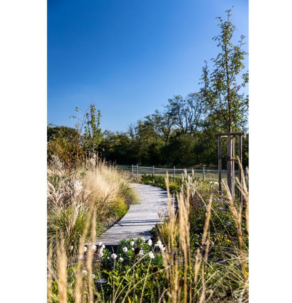 Výsadba v okrasnej záhrade lemujúca drevenú cestičku, pozostávajúca z okrasných tráv, trvaliek a drevín