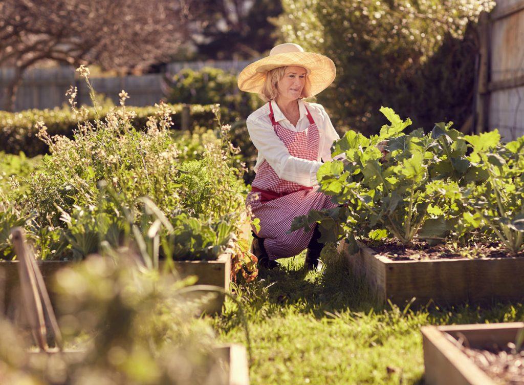 Pestovanie vo vyvýšených záhonoch