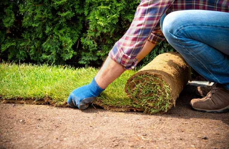 Ako rýchlo a jednoducho položiť kobercový trávnik