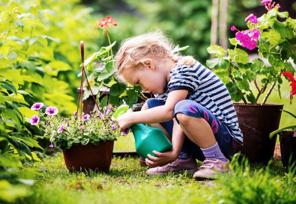 starostlivosť o kvetinové výsadby v nádobách