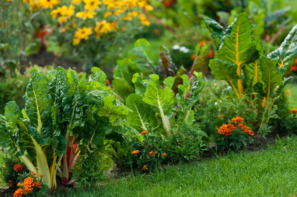 Zmiešaná výsadba z kvetov a zeleniny