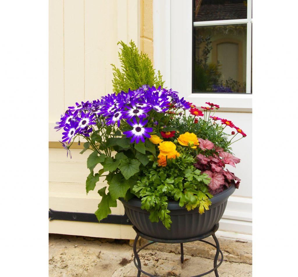 Zmiešaná výsadba kvetín v kvetináči
