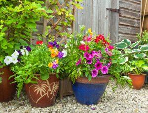 Chcete v lete kvetináče plné letničiek a trvaliek? Práve je aktuálna ich výsadba