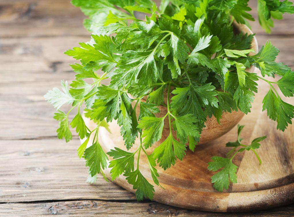 Petržlen si vystačí s málom a oceníte ho pre vysoký obsah vitamínu C a železa