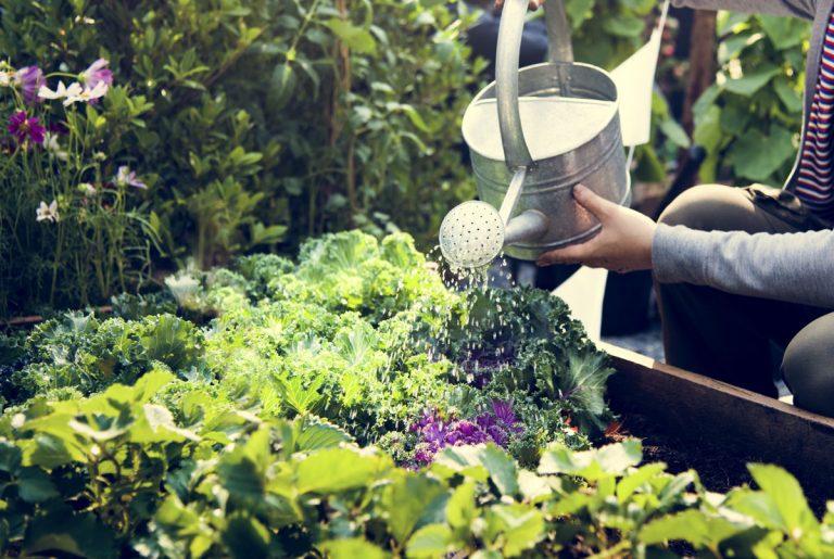 Naučte sa kombinovať okrasné a úžitkové rastliny do pestrej zmiešanej výsadby