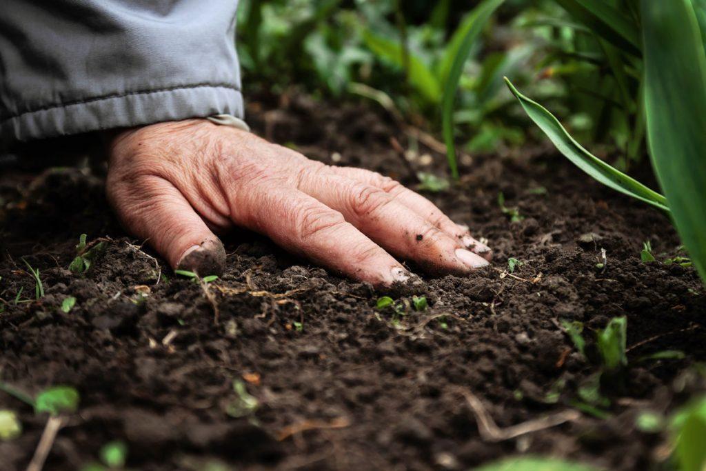 založenie trávnika, vhodná pôda