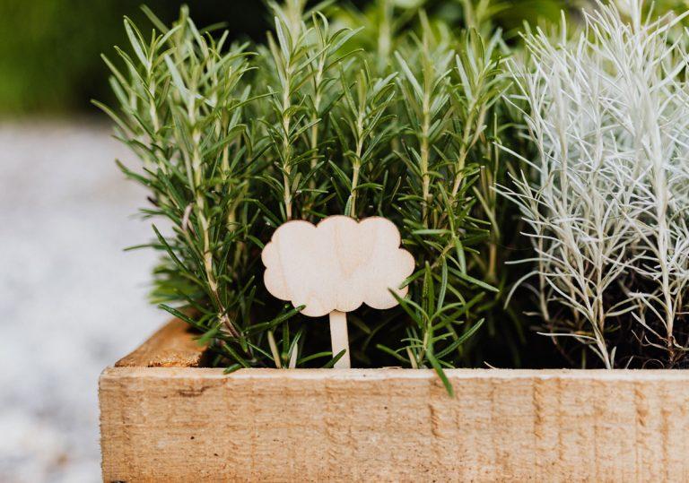Rozmarín – medonosná bylinka, ktorá dodá vašej záhrade stredomorský nádych