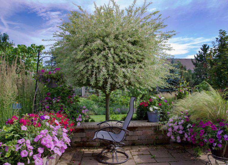 Chcete oživiť záhradu? Siahnite po panašovaných drevinách