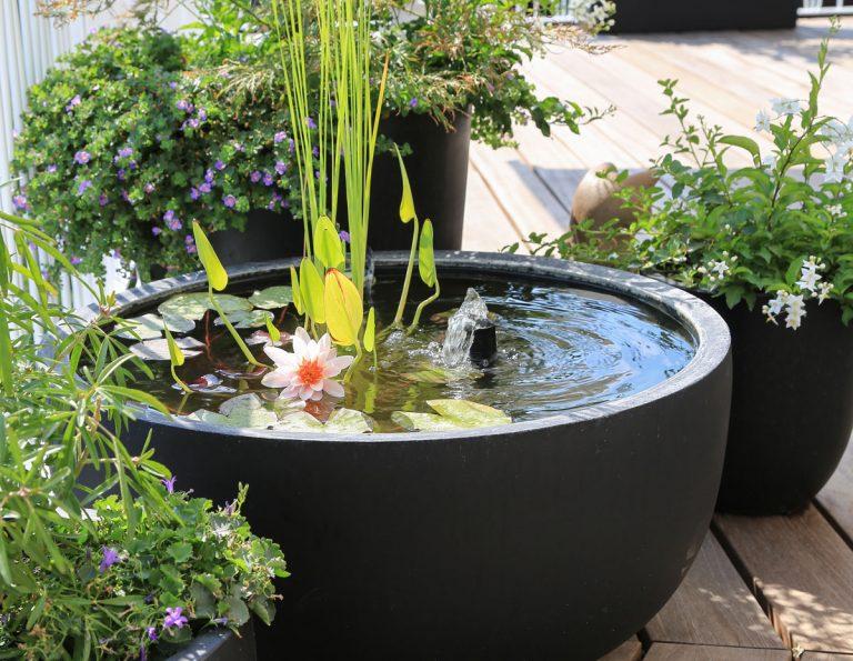 Jazierko môžete mať aj na balkóne. Kam s ním a aké rastliny doň vysadiť?