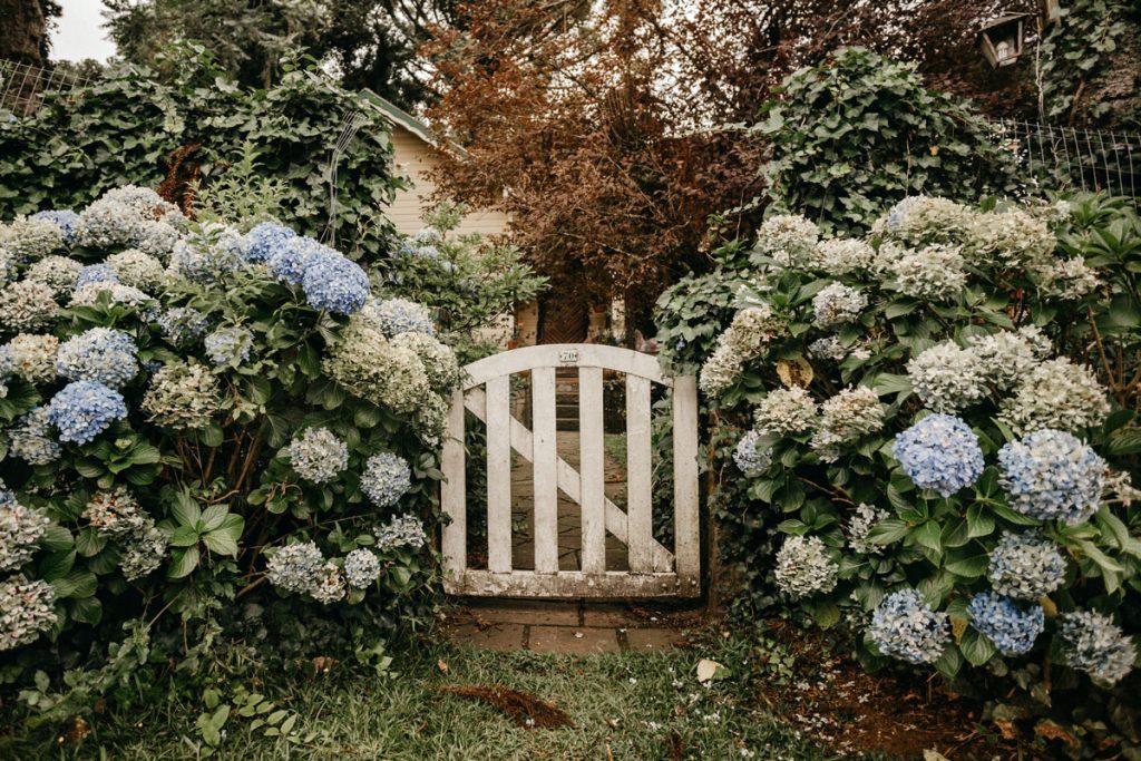 vidiecka bránička s hortenziami