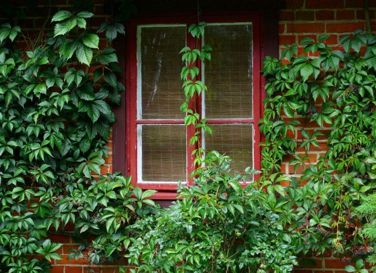 Nechajte si múry obrásť popínavými drevinami. Vysadiť ich môžete aj do kvetináčov