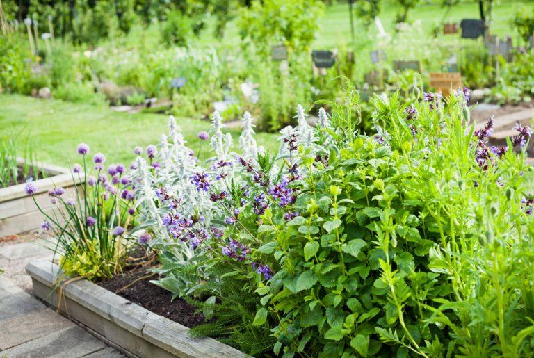 4 otázky a odpovede o bylinkovej záhrade