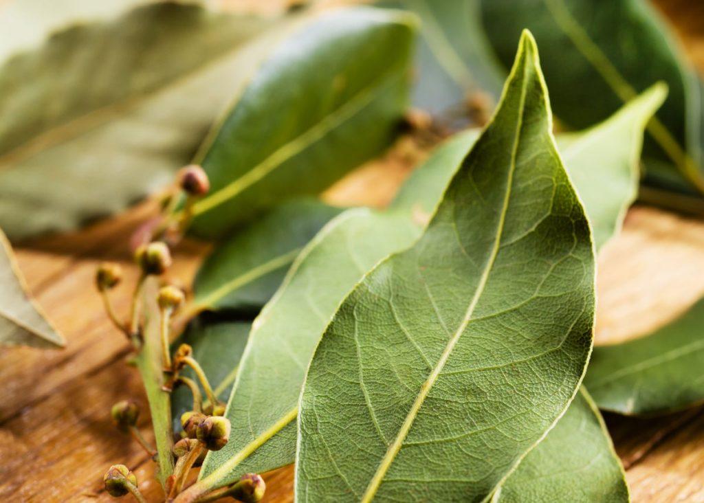 Pestujeme bobkový list. Poznáte jeho symboliku a liečivé účinky?