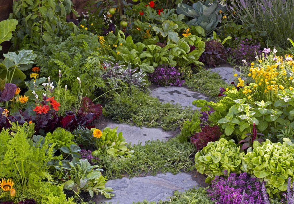 Zmiešaná výsadba byliniek a zeleniny lemujúca nášľapné chodníky