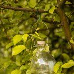 Sklenená fľaša zavesená na konári stromu