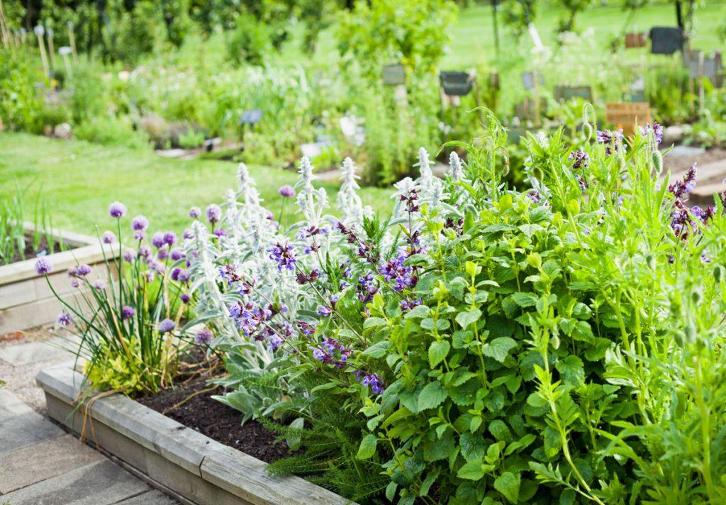 Pôdopokryvné trvalky v záhrade