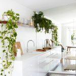 biela kuchynská linka, otvorené police s kvetmi a zrkadlová stena