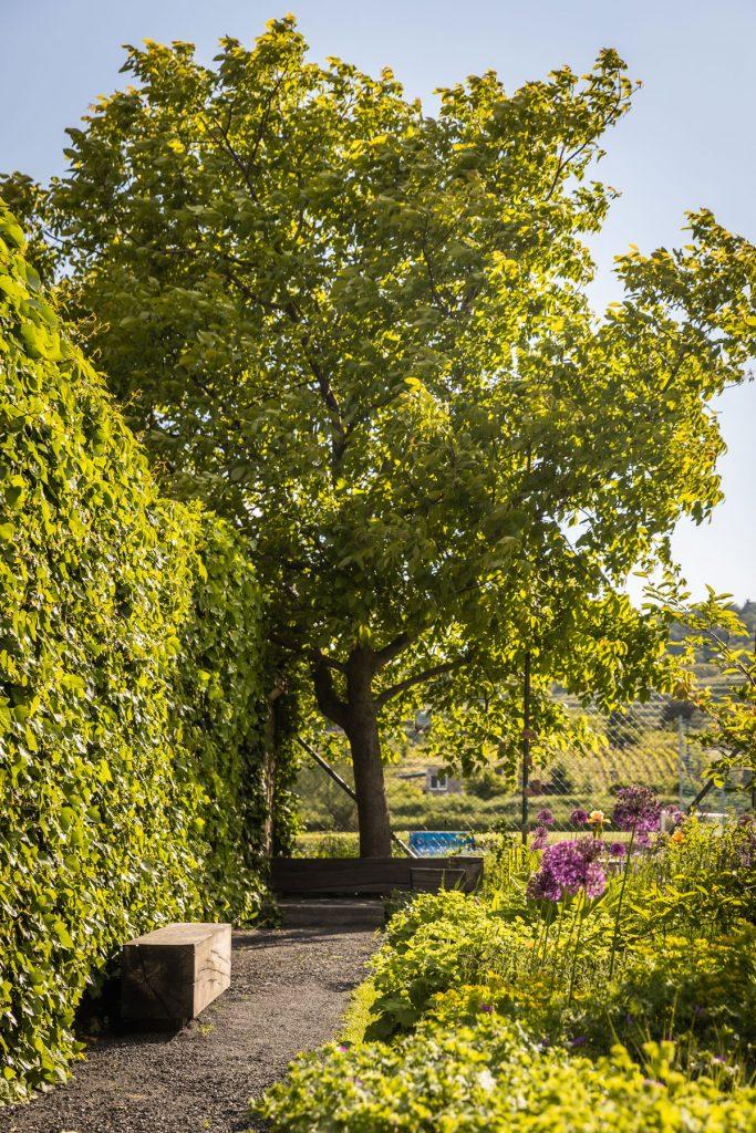 verejná záhrada v Modre s okrasnými záhonmi a dubovou lavičkou