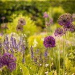 okrasné záhony zložené z trvaliek a cibuľovín v bielej, modrej, fialovej či ružovej farbe