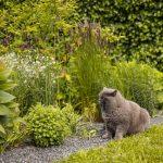 mačka sediaca pri trvalkovom okrasnom záhone v záhrade