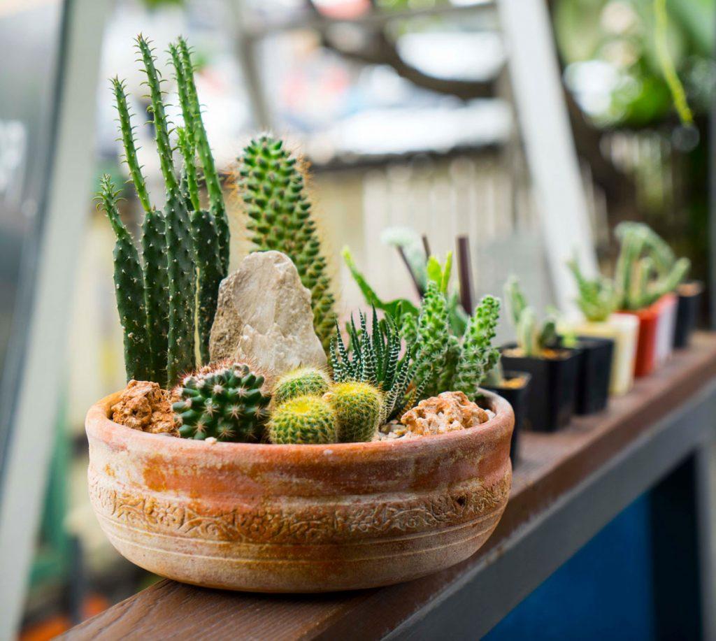Kaktusy v keramickom kvetináči