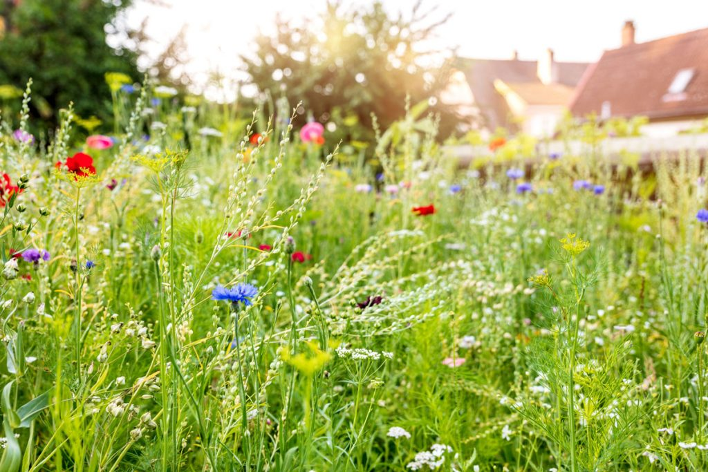 Kvetinová lúka na záhrade