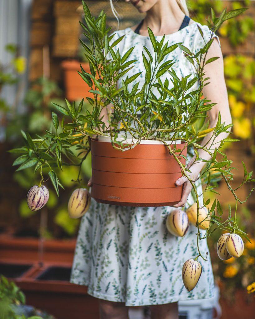 Rastlina zasadená v samozavlažovacom kvetináči