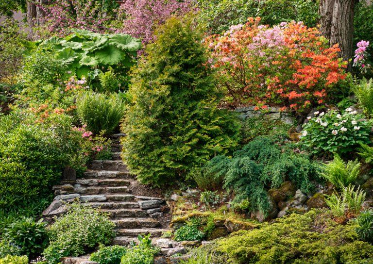 4 otázky a odpovede ako na krásnu a nenáročnú záhradu vo svahu