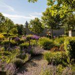 Zmiešané trvalkové záhony v univerzitnej záhrade v Nitre