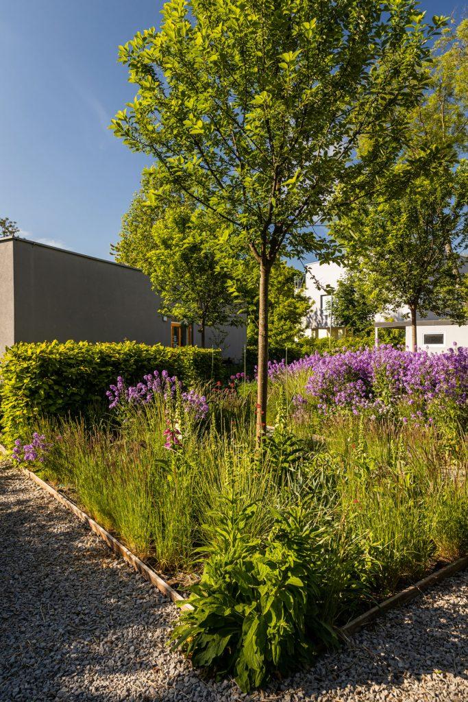 záhon s trvalkami, listnatými stromami a strihaným živým plotom z hrabu v Interaktívnej a experimentálnej záhrade v Nitre