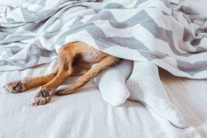 Viete, že na kvalitu spánku môže negatívne vplývať aj preplnená spálňa? Vyhoďte všetko, čo do nej nepatrí